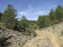 Un camin de passejada dins la Region de Cuenca (espanha) (Pèire) Tags: cuenca montanha camin pins ròca