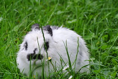 DSC_3430 (mavnjess) Tags: 15 june 2016 vicenza italy italia coniglio coniglios rabbit rabbits bunny bunnies