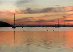 Dusky view. (cobby31 .) Tags: pooleharbour sunset duskypink sandbanks dorset poole fz72 august 2016