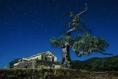 The scars of life. (darklogan1) Tags: andalusia granada spain nightphotography tree stars building logan darklogan1 alcornoque corkoak