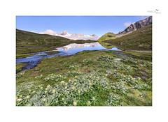 Bergsee (Frischbild) Tags: bergsee