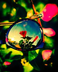 groovy new shades - 262/366 (auntneecey) Tags: sliderssunday slide hss 366the2016edition 3662016 day262366 18sep16 flower reflection sunglasses groovynewshades