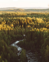 (DrowsyPotato) Tags: sony ilce7rm2 nature folk live life explore mountains mountain hill hills a7rii mark ii a7r2 135mm bokeh bokehful natural light sweden august chasers journal outdoorsy outdoors tree trees woods jmtland sverige swe scandinavia