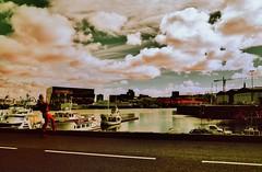 (bill bold II) Tags: pentax67ii homedeveloped kodakaerochrome fujixpressc41 6x7 120 mediumformat expiredfilm kodakeir infdrared colourinfrared colorinfrared iceland ægisgarður reykjavic rmfs