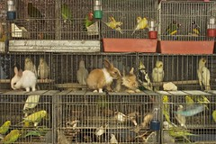 Let's follow the white rabbit (out of the cages) (Cozla) Tags: cages cage lines fences rabbit birds freedom colors animals onsale whispers