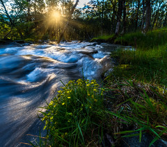 Shift sun (strupert) Tags: ts tiltshift eveningtrip sun woods flowers d810 nikon summer pce24mm longexposure slowshutter river midnightsun norway northernnorway bentsjord