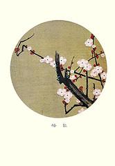 Plum (Japanese Flower and Bird Art) Tags: flower plum prunus mume rosaceae jakuchu ito ukiyo woodblock picture book japan japanese art readercollection