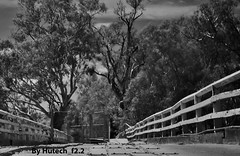 A Windy Infrared Walk on the Stock Bridge (Hutech_f2.2 (I'm staying too!)) Tags: bridge trees summer bw art creek landscape nikon wind stock australia infrared wodonga 2013