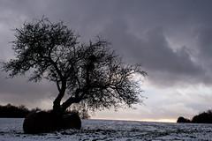 Kontrast II (Koedir) Tags: schnee bw snow tree clouds feld wiese wolken olympus sw baum omd em5 koedir