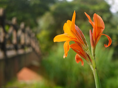 Penang Botanic Gardens 845 (oznasia) Tags: november lumix asia southeastasia panasonic m
