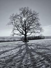 Winter Tree (m.a.r.c.i) Tags: schnee winter bw snow tree backlight germany blackwhite stuttgart fujifilm monochrom fujinon baum marci badenwrttemberg xe1 katharinenlinde xf18mmf2