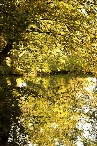"""Herfst in Amelisweerd • <a style=""""font-size:0.8em;"""" href=""""http://www.flickr.com/photos/34373543@N03/8492340767/"""" target=""""_blank"""">View on Flickr</a>"""