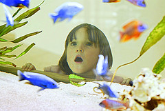 Fish (Chagab) Tags: windows baby snow colors pool girl beautiful smile kids swimming children kid high model nikon key child kinder nina d200 enfant farbe luge fenetre reagrd