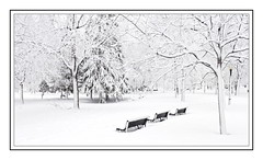 Parc LaFontaine,  Montral (Snowy morning in Montreal) (Claude Robillard) Tags: snow bench neige parc parclafontaine banc plateaumontroyal bancpublic
