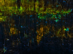 Forest Reflections (bethrosengard) Tags: photomanipulation digitalart photoart digitallyenhanced digitalmagic bethrosengard