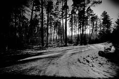 IMG_1317.jpg (budbrain) Tags: schnee winter light bw snow flower bird art berg birds train canon landscape licht tiere und frost ship mark wiese ducks sigma goat blumen ii josef 7d l 5d dslr enten rhein weiss blackbird 1740mm schwarz hunde montain schiffe koblenz lanschaft 400mm schmitten ehrenbreitstein schmittenhhe hhe asterstein sejrek budbrainde josefsejrek djjupp