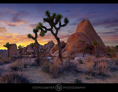 Desert Sky (Steph Sawyer Photography (will catch up slowly)) Tags: california hiddenvalley mojavedesert yuccabrevifolia twentyninepalms joshuatreenationalpark sanbernardinocounty desertsky coloradodesert riversidecounty desertpark wildernessarea littlesanbernardinomountains stephsaywerphotography