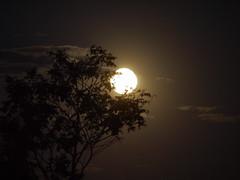 Lua, o mundo de Sophia. (Maga Dias) Tags: moon luz nature brasil mood cerrado today maga pirenopolis goias luacheia adolecente naturebest omundodesophia