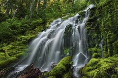 The Wrong Proxy Falls (posthumus_cake (www.pinnaclephotography.net)) Tags: green nature oregon landscape waterfall moss wilderness proxy proxyfalls upperproxyfalls