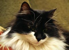 DSC_0123 (dan-morris) Tags: white black green cat eyes nikon whiskers 1855mm dslr sweep vr beginner f3556g 1855mmf3556gvr d3100