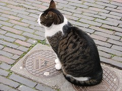 Warmte (indigo_jones) Tags: holland brick netherlands kat utrecht nederland warmth sidewalk heat winkel warmte voetiusstraat heatseekingcat voetiusstraatkat buurdieren