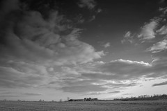 (RachelTosh) Tags: life trees sky blackandwhite plant flower tree nature field grass landscape darlington naturephotography milllane