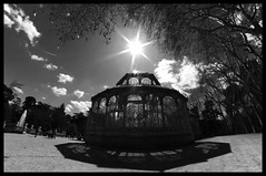 Flying into the sun (Herminio.) Tags: madrid park parque bw parco glass architecture backlight contraluz garden pc arquitectura jardin pb bn bp cristal retiro parc architettura giardino verre vetro contrallum jard vidre retroilluminazione rtroclairage parquedelretiropalaciodecristal retiroparkcrystalpalace leparcduretirocrystalpalace parcodelretirocrystalpalace parcdelretiropalaudevidre