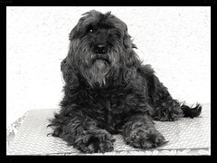 Chloe (mibric) Tags: dog chien pet animal chloe perro perra