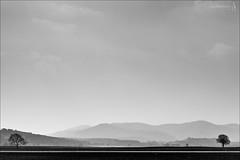 Trees... (der LichtKlicker) Tags: road street trees sky blackandwhite tree canon is blackwhite strasse himmel hills berge l canon5d usm weiss bume baum f28 ef schwarz kaiserstuhl 70200mm ef70200mmf28lisusm wartezimmer