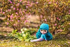 Sunbathing in the Japanese Garden