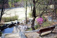 Edge of Spring (Génial N) Tags: flower bench campus spring pentax korea seoul springflower pentaxk01