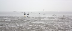 Zwei auf'm Meer | Two on the flats (fotoeins) Tags: travel winter heritage beach canon germany geotagged deutschland eos grey cloudy horizon unesco northsea lowtide nordsee unescoworldheritage elbe mudflat worldheritage xsi cuxhaven wattenmeer tidalflat welterbe waddensea eos450d 450d weltnaturerbe nationalparkwattenmeer fotoeins niederschsischeswattenmeer canonefs1855mmf3556isii henrylflee geo:lat=53892010905126924 geo:lon=8676624298095703