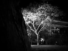 Night at the park (Geo.M) Tags: city tree green nature night landscape greek lights george flora natural walk greece fujifilm scape poli bolos giorgos nomos ellas ellada  volos thessaly  elliniko   thessalia dendro  prasino  topio  magnesia       magnisias   fysi     miliokas  vlastisi  fysiko