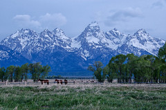Celebrate Earth Day (dbushue) Tags: horses mountains nature fence landscape nikon valley wyoming peaks 2012 snowcovered grandtetonnationalpark coth gtnp mormonrow supershot coth5 dailynaturetnc13