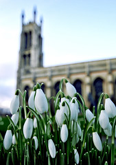 Welcome Spring! (Serge Freeman) Tags: uk flowers england church spring snowdrops kidderminster