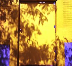 Yellow blue door shadow (GJosephT) Tags: fujisuperia400asa heliar15mm bessar2m superwideangle street tree shadow door blue yellow