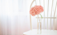 My favorite window (jm atkinson) Tags: purple window vase hydra hydrangea windowwednesday soft morning light pastel