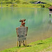 0536 Oh je, jetzt müssen die Kühe sogar auf Ihre Lebensqualität hinweisen.