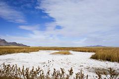 Fish Springs Salt Pan (fate atc) Tags: fishsprings usa utahdesert remote saltgrass saltpan