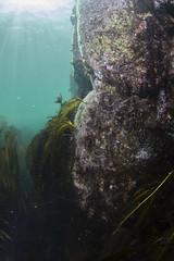 20160803-Eyemouth17 (Dacmirc) Tags: eyemouth diving ukdiving rebreather