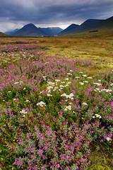 Sur la route (-Lucie-) Tags: nikond7100 sigma1750 islande paysage nature