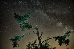 (Philippe Vieux-Jeanton) Tags: sky night boissyaucailles iledefrance france astrophotography astrophotographie tree arbre milkyway voielacte sonya6000 samyang12mmf20