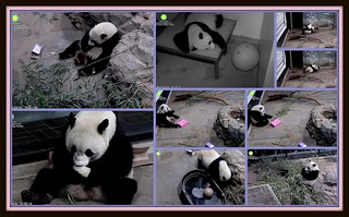 Bao Bao is 3 years old today!