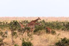 IMG_8586.jpg (aktaion ronald) Tags: zambia zuidafrika 2016 malawi zimbabwe afrika matabelelandsouth zw