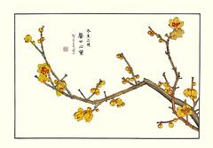 Wintersweet (Japanese Flower and Bird Art) Tags: flower wintersweet chimonanthus praecox calycanthaceae shoseki kose nihonga woodblock picture book japan japanese art readercollection