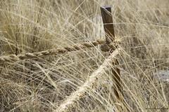 abandonado (Eneko Bustamante) Tags: cuerda amarillo yellow madera wood rope stake campo pampa countryside field hide wind viento latinoamrica america southamerica per latin hunuco