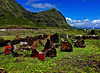 Sacred Spaces (jcc55883) Tags: hawaii oahu wainmanalo makapuubeach heiau kuheiau bonniesilva sacredspaces kalanianaolehighway mountains pali sky clouds nikon nikond3200 d3200