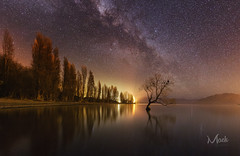 That Wanaka Tree (Mikey Mack) Tags: wanaka otago newzealand nz