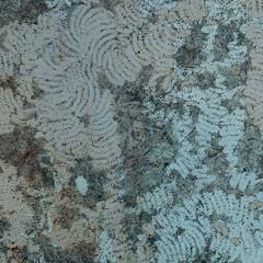Landkaart (Birgit Speulman) Tags: sporen vraat tekens tekening pattern patroon drawing signs