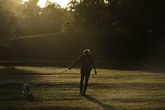 Struggle (Markus Jansson) Tags: hagaparken haga stockholm dog evening light sunset golden hour atmosphere flare